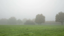 walking in foggy park far away Footage
