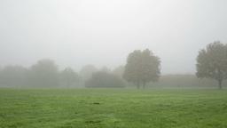 walking in foggy park far away Footage