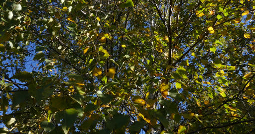 Sun seen through green and yellow leaves 109 Footage