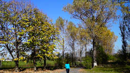 Woman with turquoise sweater walking on a country road. Autumnal landscape Footage