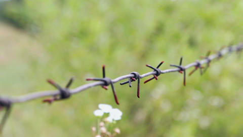 Old rusty barbed wire. Close-up focus pull Footage