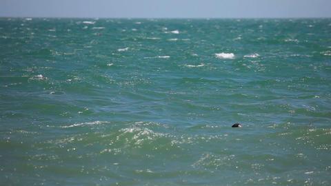 Beginner surfer Footage