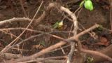 Brazil: Amazon River Region Birds 2 stock footage