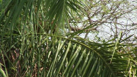 Brazil: monkeys running on a trees in Amazon 4 Stock Video Footage
