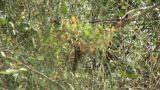 Brazil: monkeys running on a trees in Amazon 3 Footage