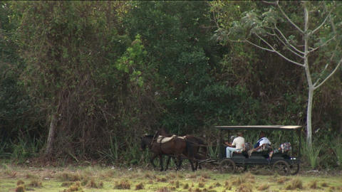 Brazil: people traveling in a horse power carriage Stock Video Footage