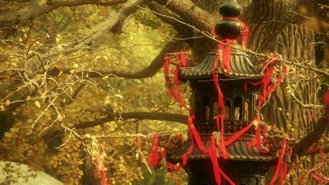 Incense burner and ginkgo tree in... Stock Video Footage