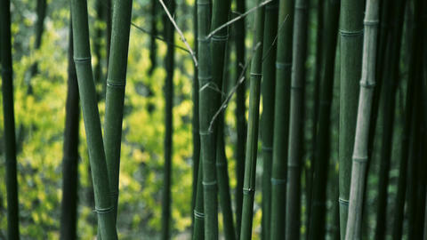 wind shaking bamboo,quiet atmosphere Footage
