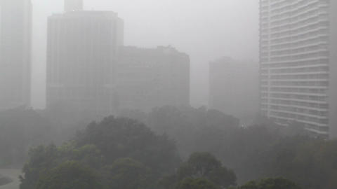 Heavy Rain in Sydney Hyde Park 03 Stock Video Footage