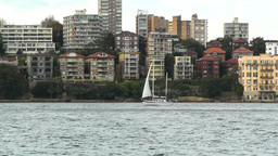 North Sydney view 06 sailboat Stock Video Footage