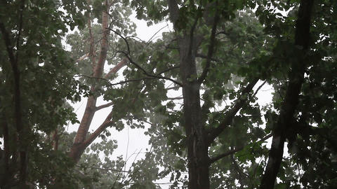 Storm of oppression trees Stock Video Footage
