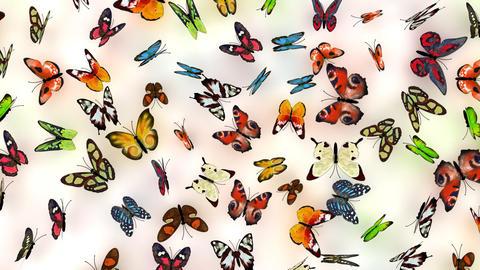 butterflies background Stock Video Footage