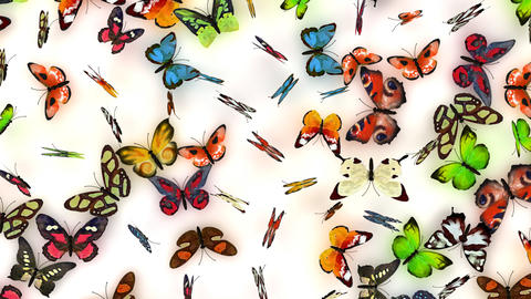 butterflies on white background Stock Video Footage