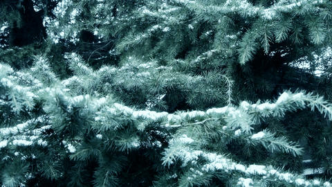 Snow cover pine trees Stock Video Footage