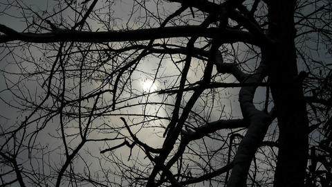 Branches covered sky and cloud.Trunk,forest,woods,Desolate Footage