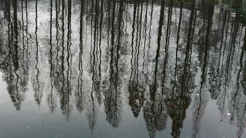 Forest reflection in water,ripple Stock Video Footage
