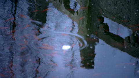 Forest and Bridge reflection in water,fish swimming and... Stock Video Footage