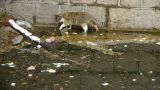 Cat playing in pool side,dead fish in pollution water Footage