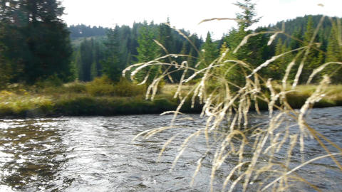 Panorama Over Dried Herbs And Mountain River 60 stock footage