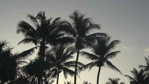 Ngwe Saung, Silhouettes of palm trees at sunrise Footage