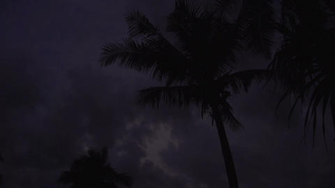 Ngwe Saung, cloudy sky and palmtrees at sunset Live Action