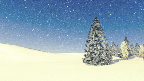 Snowy Firs Among Snowdrifts At Snowfall stock footage