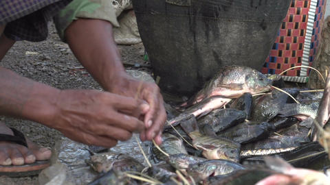 Nyaung Shwe, fish tie Stock Video Footage