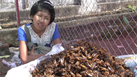 Yangon, stall with fried grasshoppers Stock Video Footage
