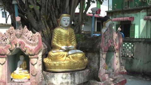 Yangon, buddha statues under tree Footage