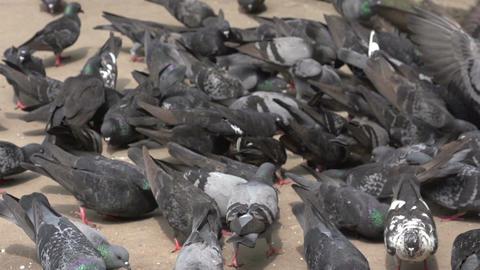 Yangon, pigeons on street Footage