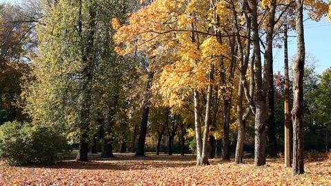 Beautiful autumn landscape Footage