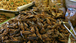 Fried Insects At Market In Lampang, Thailand stock footage