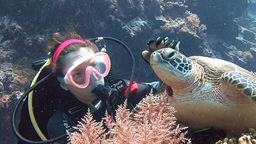 The Green Turtle Is Also In Need Of Affection And Tenderness. Great Diving With stock footage
