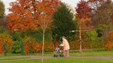 pensioner wheel walker in colorful autumn park 11750 Live Action
