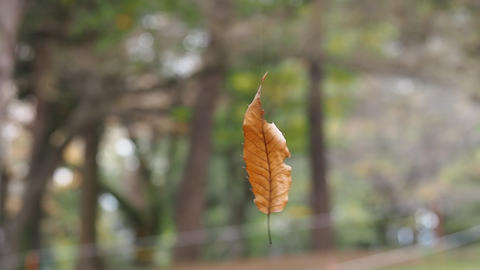 Blown Leaves stock footage