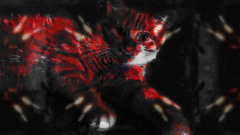 Red Cat With Kaleidoscopic BG stock footage