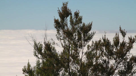 Trees Above The Clouds stock footage