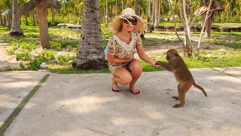 girl tourist in hat sunglasses squats feeds monkey with fruit Footage