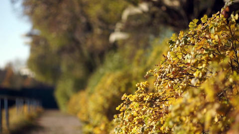 autumn landscape shallow depth of field Footage