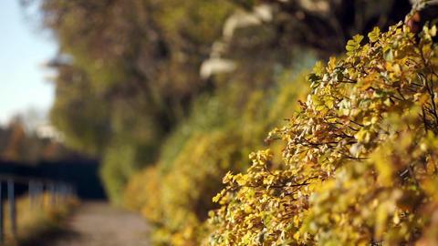 autumn landscape shallow depth of field Footage