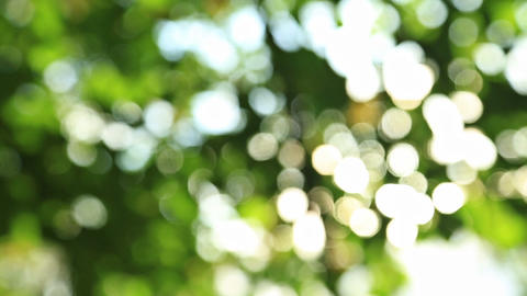Sunny abstract green nature background Footage