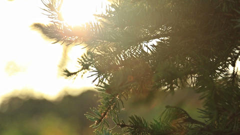 Sunlight and lens flare,tree leaves Footage