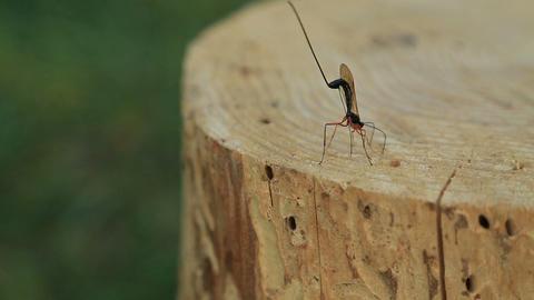 Dragon fly on stump Footage
