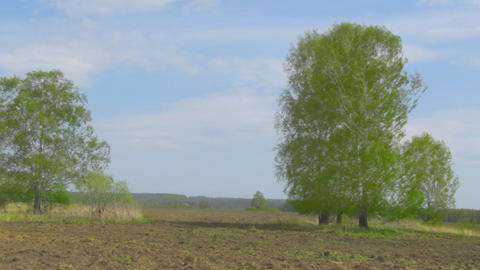 spring field Stock Video Footage
