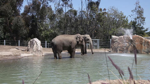 Elephants in water in the zoo Stock Video Footage