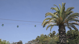 Cableway and palm tree Stock Video Footage