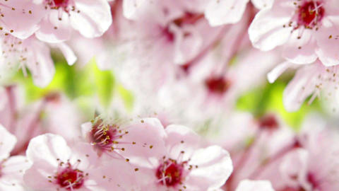 Flowere4r78f Stock Video Footage