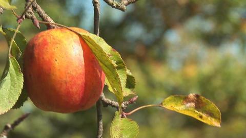 apple 1 Stock Video Footage