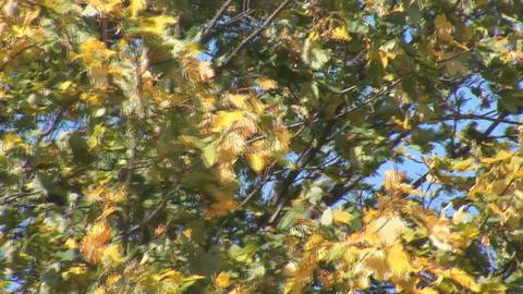 autumn 8 Stock Video Footage