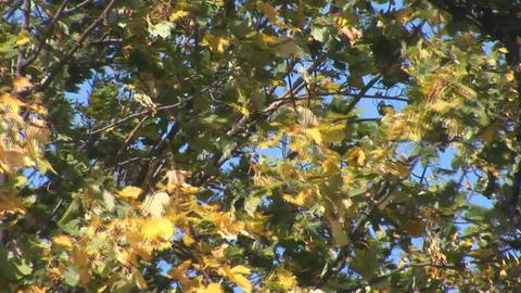 autumn 8 Footage